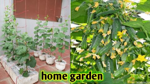 vegetable growing season chart india