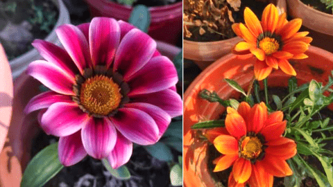 winter flowers in india