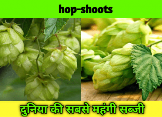hops in india